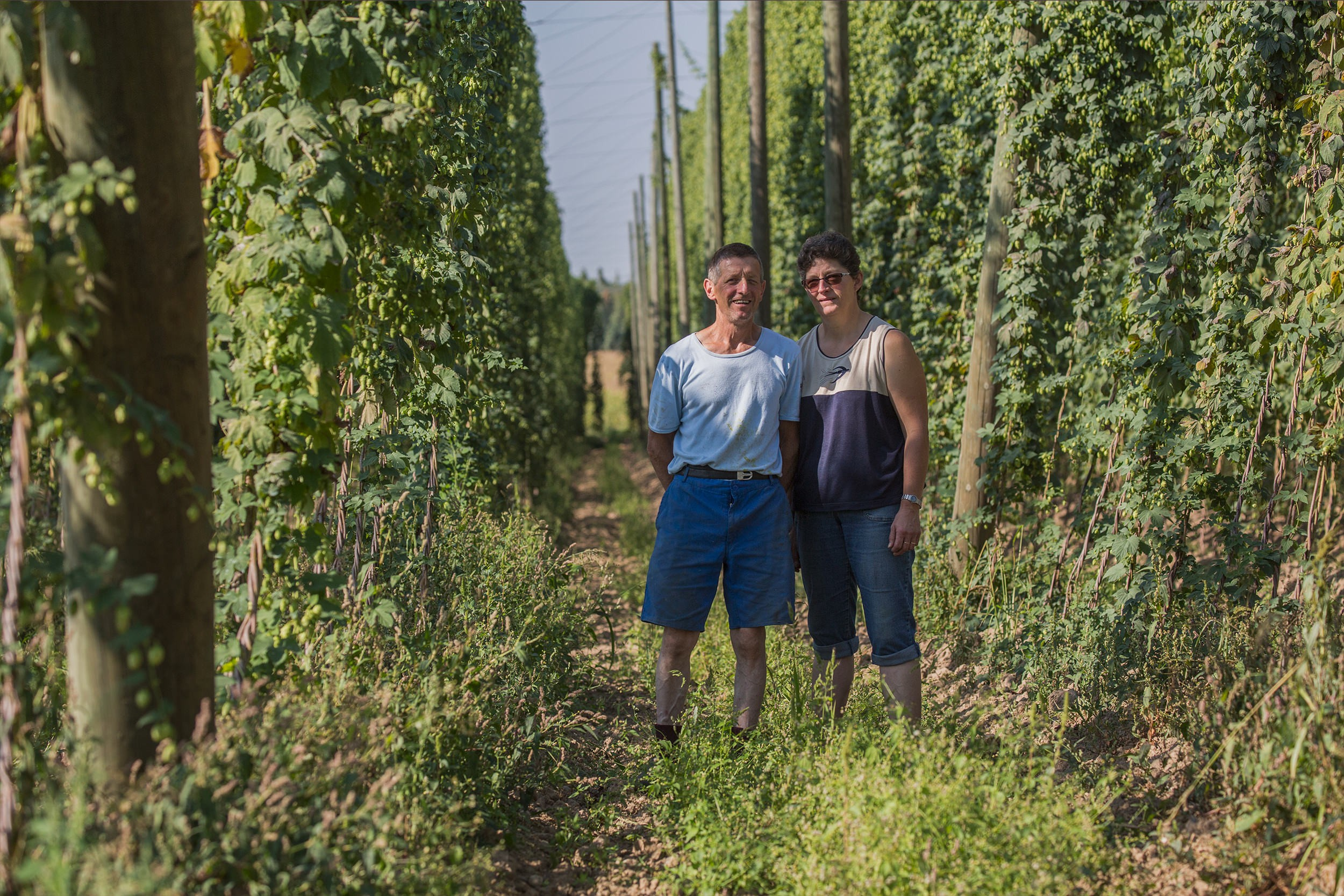 Le houblon d'Alsace cultive l'innovation et la tradition, naturellement